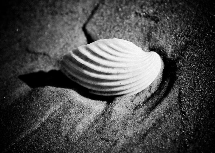 Scene Greeting Card featuring the photograph Shell On Sand Black And White Photo by Raimond Klavins