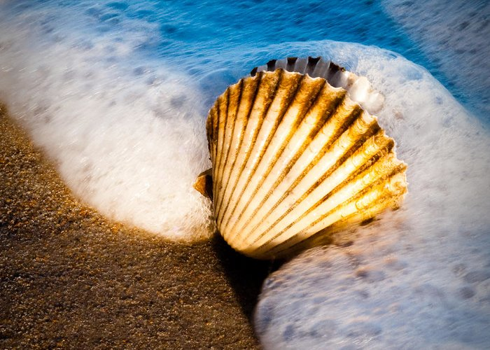 Sea Greeting Card featuring the photograph Shell Series No. 2 by John Pagliuca