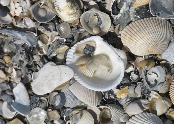 Landscape Greeting Card featuring the photograph Shells In Shells 1 by Ellen Meakin