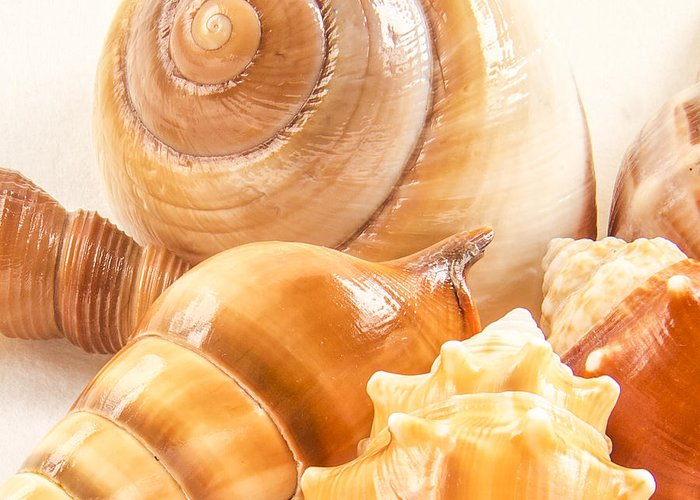 Shell Greeting Card featuring the photograph Shells by Jean Noren