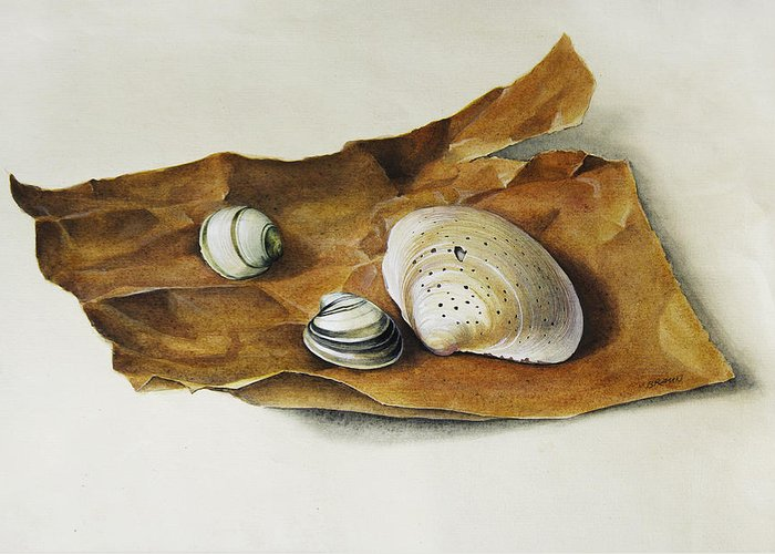 Shell Greeting Card featuring the painting Shells On Paper by Horst Braun