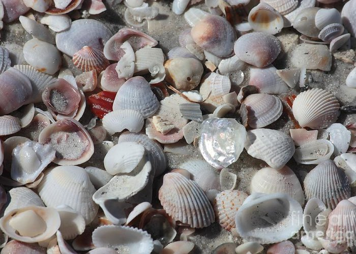 Shells Greeting Card featuring the photograph Shells On Treasure Island by Carol Groenen