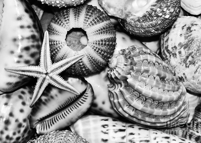 Shellscape In Monochrome Greeting Cards