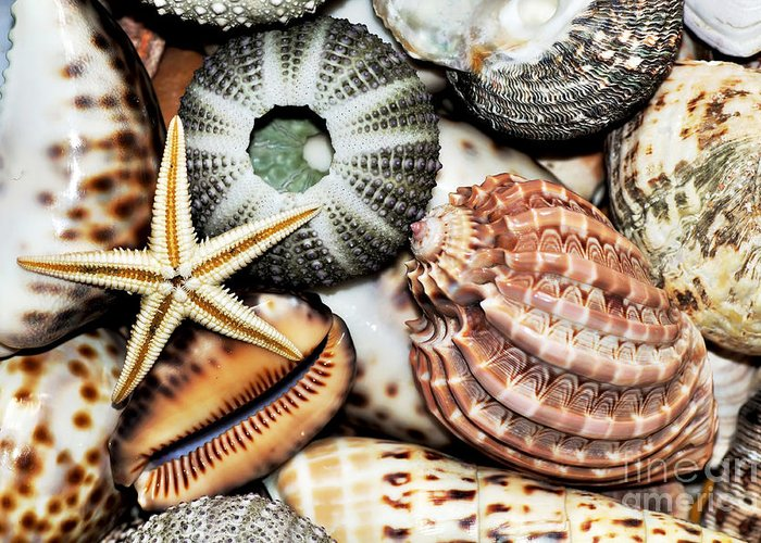 Photography Greeting Card featuring the photograph Shellscape by Kaye Menner