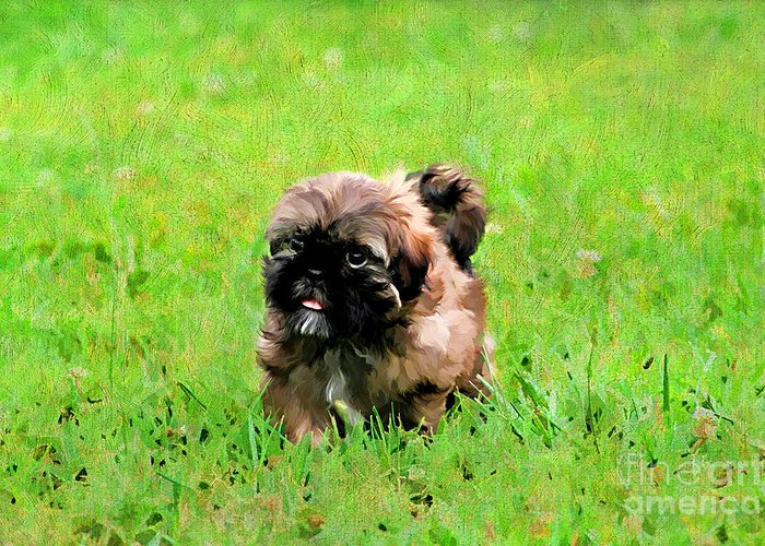 Painterly Greeting Card featuring the photograph Shih Tzu Puppy by Darren Fisher