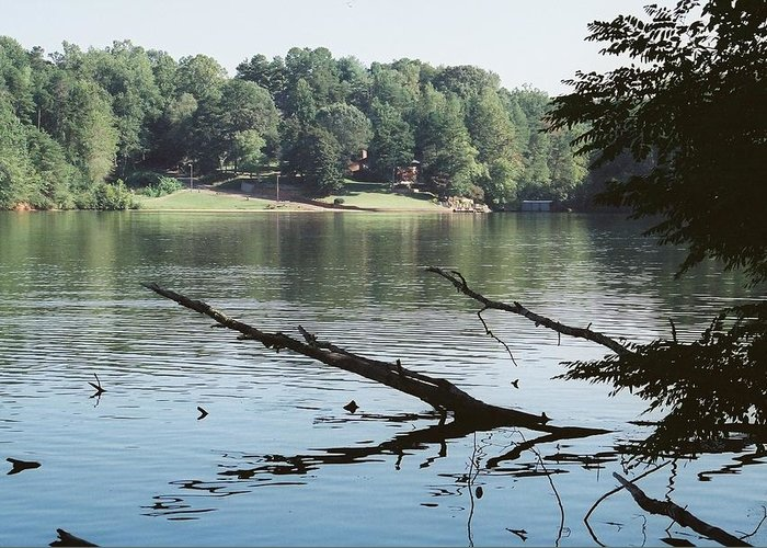 River Greeting Card featuring the photograph Shoreline In Summer by Ed Gale