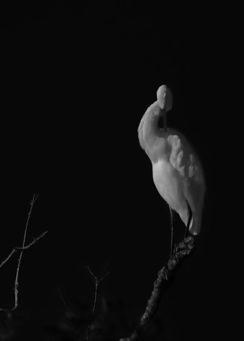 Black And White Greeting Card featuring the photograph shy by Mario Celzner
