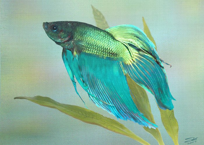 Aquarium Greeting Card featuring the painting Siamese Fighting Fish by IM Spadecaller