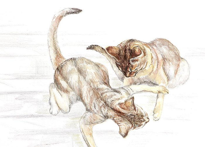 Illustration Greeting Card featuring the drawing Siamese Like Cats by Kathryn Dalziel