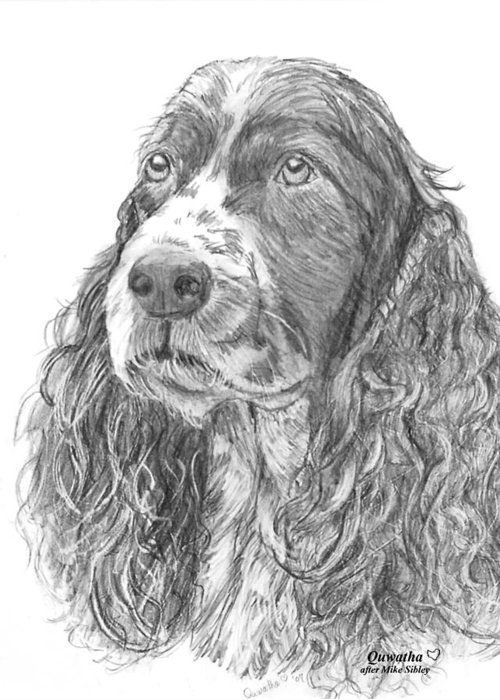 Dog Greeting Card featuring the drawing Sibley by Quwatha Valentine