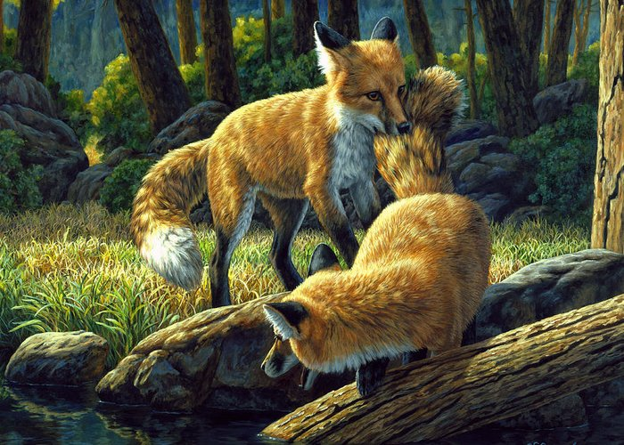 Fox Greeting Card featuring the painting Red Foxes - Sibling Rivalry by Crista Forest