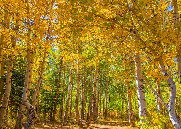Landscape Greeting Card featuring the photograph Sierra Aspen by Marc Crumpler