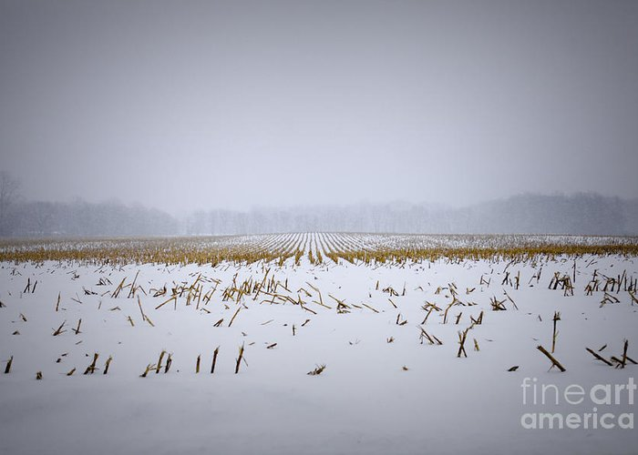 Snow Greeting Card featuring the photograph Silent Drift by Kelly Morrow