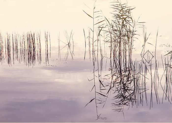 Nature Greeting Card featuring the photograph Silent Rhapsody. Sacred Music by Jenny Rainbow