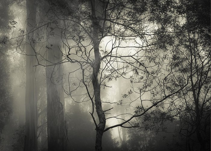 Fog Greeting Card featuring the photograph Silent Stirring by Amy Weiss