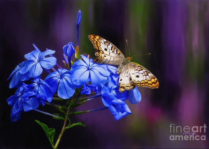 Butterfly Greeting Card featuring the photograph Silver And Gold by Lois Bryan