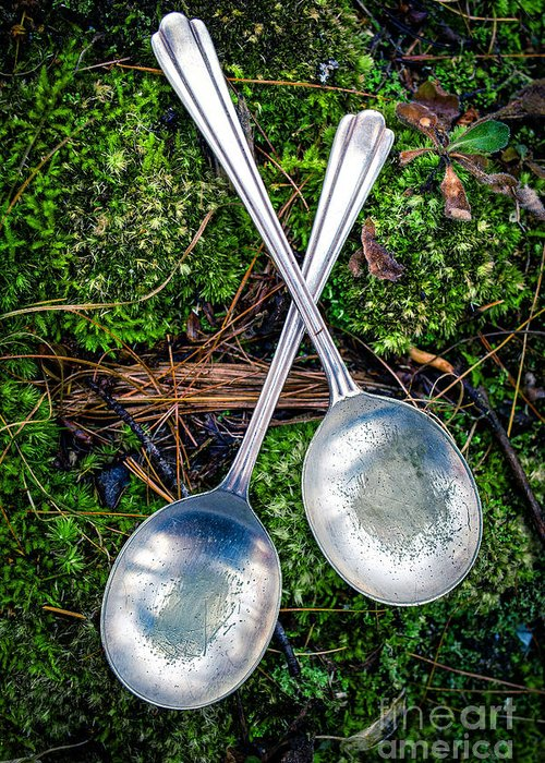 Moss Greeting Card featuring the photograph Silver Spoons by Edward Fielding