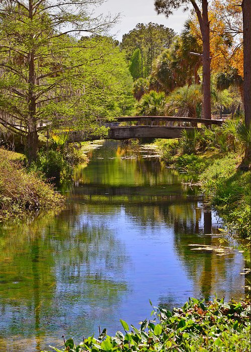 Silver Greeting Card featuring the photograph Silver Springs Florida by Christine Till