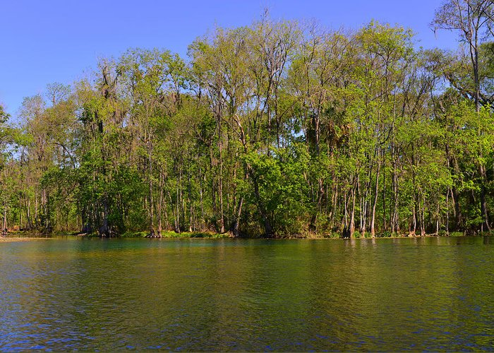 Silver Greeting Card featuring the photograph Silver Springs - Old-style Florida by Christine Till
