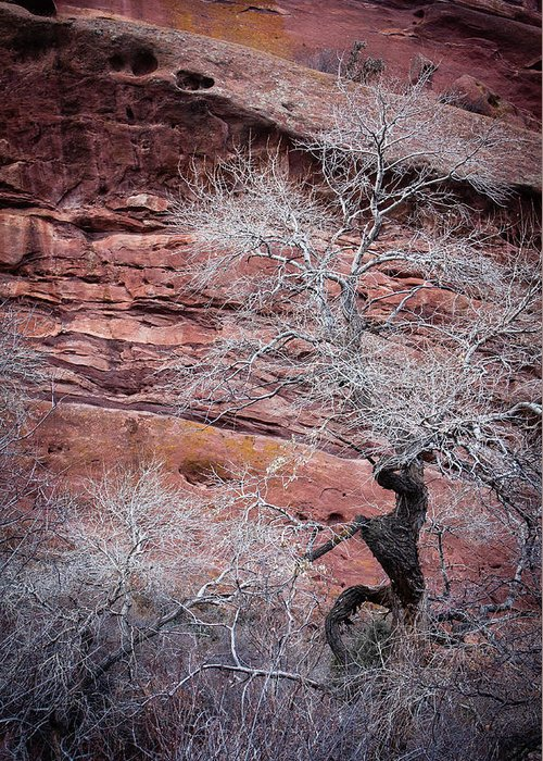Colorado Greeting Card featuring the photograph Silver Tree And Red Rocks by Karen Saunders