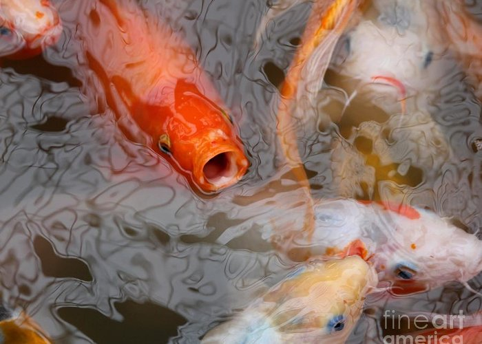 Carp Greeting Card featuring the photograph Singing Carp by Theresa Willingham