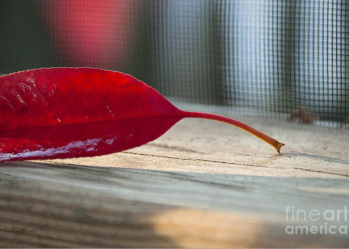 Single Greeting Card featuring the photograph Single Red Leaf by Terry Rowe