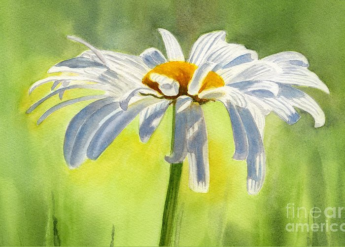 White Daisies Greeting Card featuring the painting Single White Daisy Blossom by Sharon Freeman