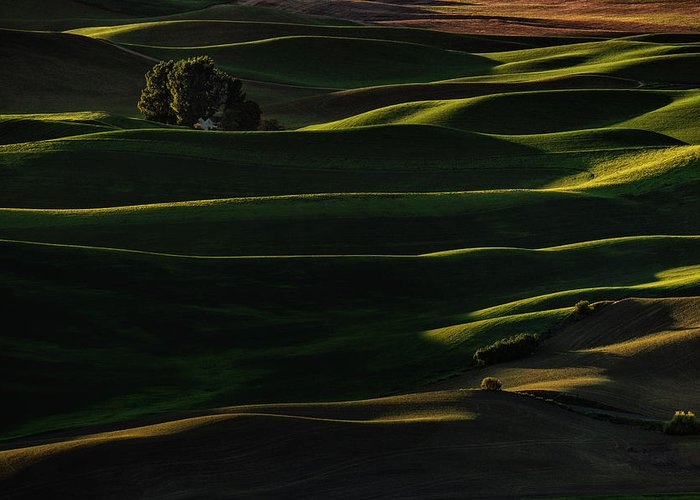 Spring Greeting Card featuring the photograph Sinuous by Lydia Jacobs