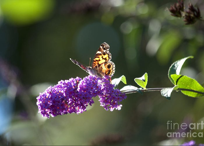 Butterfly Greeting Card featuring the photograph Sipping On Syrup by Affini Woodley