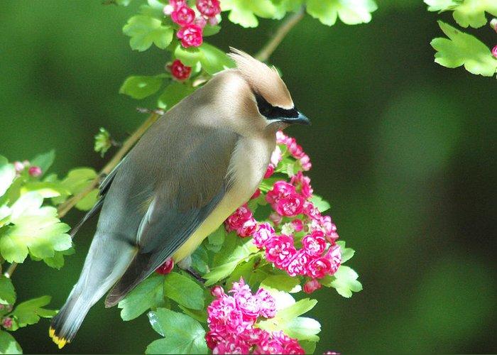 Birds Greeting Card featuring the photograph Sittin' Pretty by Annie Pflueger