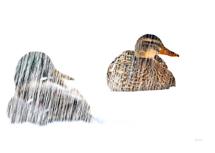 Duck Greeting Card featuring the photograph Sitting Ducks In A Blizzard by Bob Orsillo