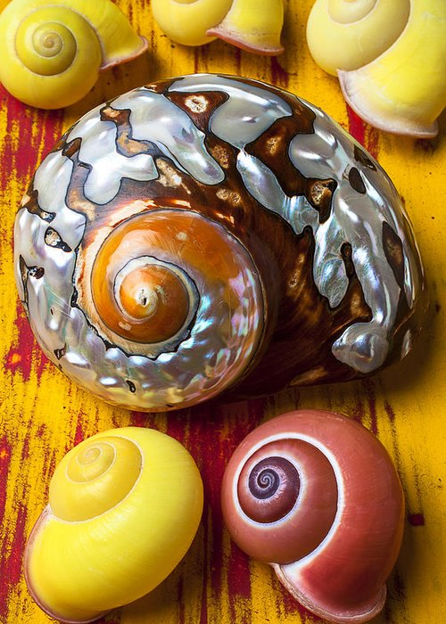 Six Greeting Card featuring the photograph Six Snails Shells by Garry Gay