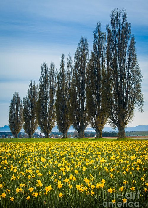 America Greeting Card featuring the photograph Skagit Trees by Inge Johnsson