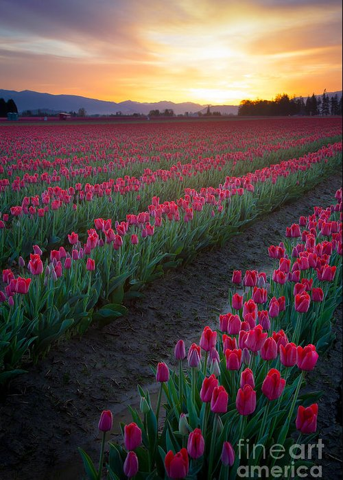 America Greeting Card featuring the photograph Skagit Valley Blazing Sunrise by Inge Johnsson