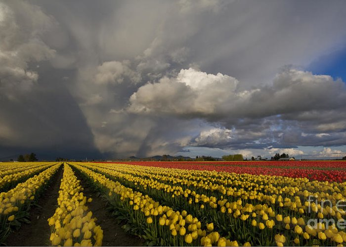Skagit Greeting Card featuring the photograph Skagit Valley Storm by Mike Reid