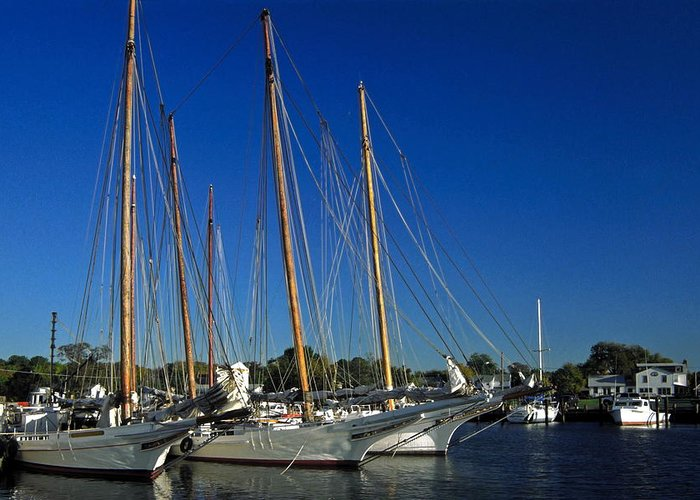 Skipjack Sailboats Docked Greeting Card featuring the photograph Skipjacks by Sally Weigand
