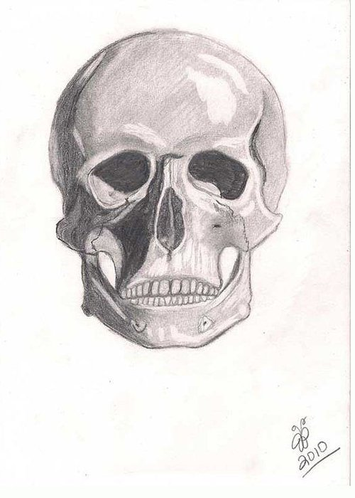 Skull Greeting Card featuring the drawing Skull by Jessica Phillips-Hight