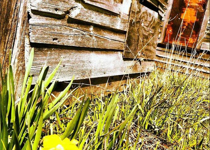 Daffodil Greeting Card featuring the photograph Slash Of Spring by Ciara Stumm