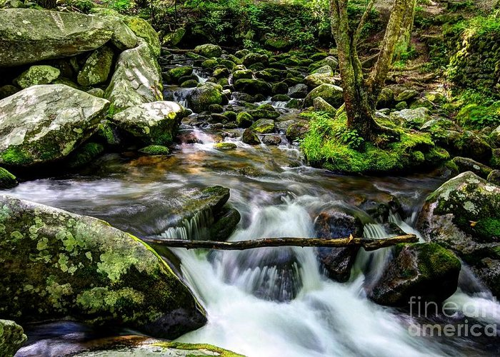 Smoky Mountains Greeting Card featuring the photograph Smoky Mountain Stream 4 by Mel Steinhauer
