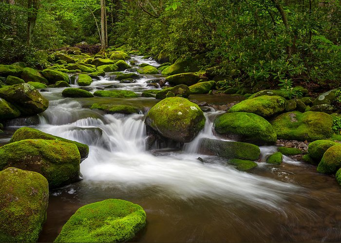 Great Smoky Mountains Greeting Card featuring the photograph Smoky Mountains Paradise - Great Smoky Mountains Gatlinburg Tn by Dave Allen