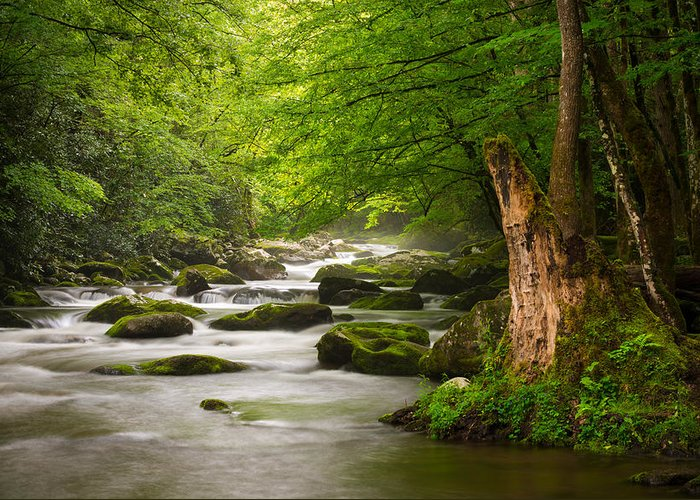 Great Smoky Mountains Greeting Card featuring the photograph Smoky Mountains Solitude - Great Smoky Mountains National Park by Dave Allen