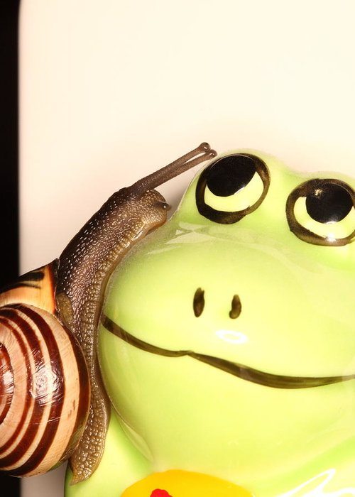 Snail Greeting Card featuring the photograph Snail Looking At Frog by Robin Martin