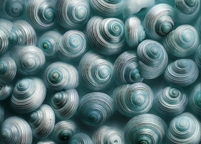 Snails Greeting Card featuring the photograph Snails Cyan by Priska Wettstein