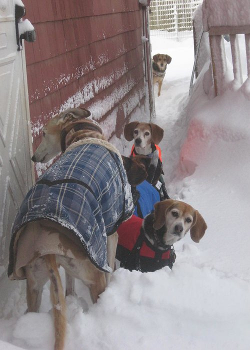 Beagles Greeting Card featuring the photograph Snow Angels by Leslie Manley
