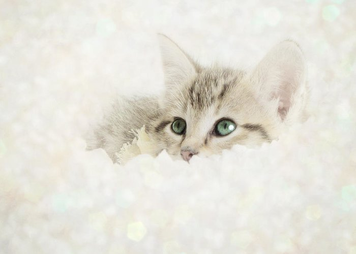 Kitten Greeting Card featuring the photograph Snow Baby by Amy Tyler