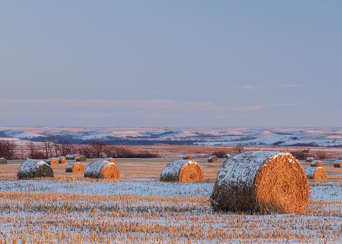 Blue Sky Greeting Card featuring the photograph Snow Covered Bales by Scott Bean