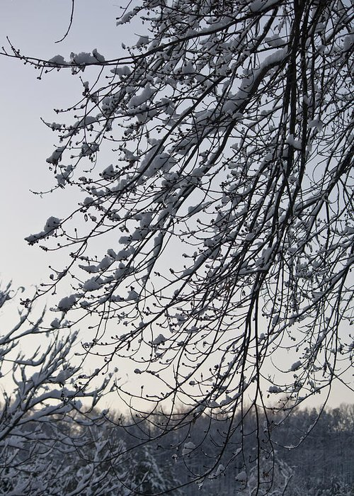 Snow Greeting Card featuring the photograph Snow Covered Branches by Teresa Mucha
