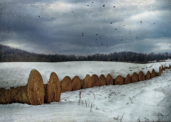 Hay Greeting Card featuring the photograph Snow Covered Hay Bales by Kathy Jennings