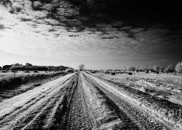 Small Greeting Card featuring the photograph snow covered untreated rural small road in Forget Saskatchewan Canada by Joe Fox