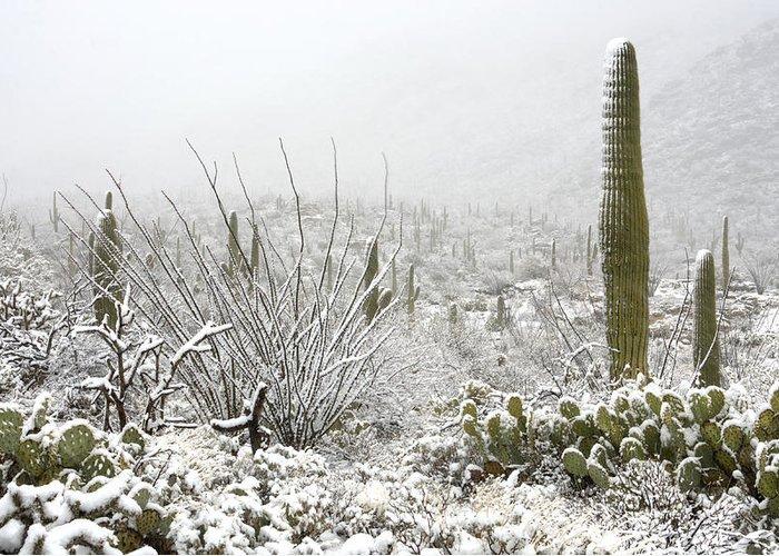 Arizona Greeting Card featuring the photograph Snow Day In The Desert by Saija Lehtonen